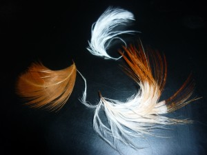 plumes%20130[1]